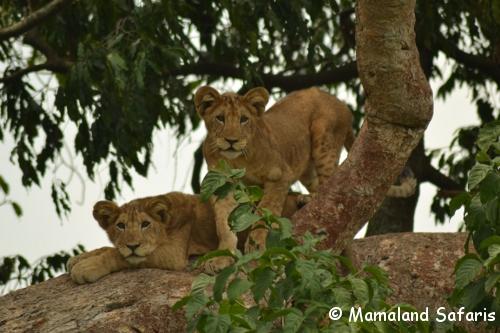 Ishasha safari